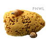 Natural Bleached Sea Sponge, 5 inch
