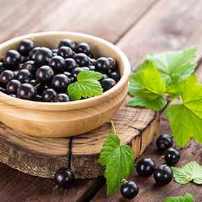 Blackcurrant Fragrance Oil