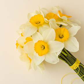 Narcissus II Fragrance Oil