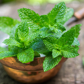 Peppermint Flavor Oil