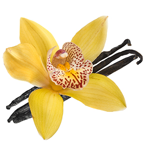 Vanilla Flower Henri Bendel Type Fragrance Oil