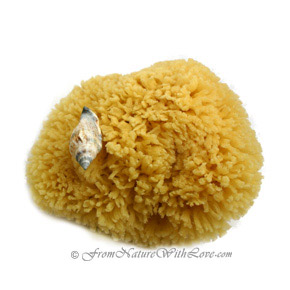 Atlantic Silk Sponge, 3 inch